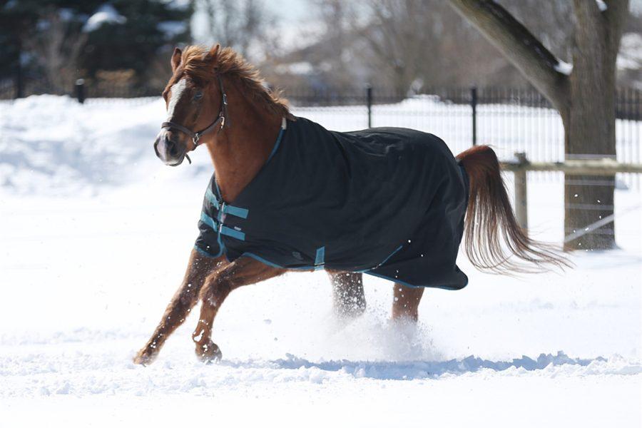 Equestrian Community